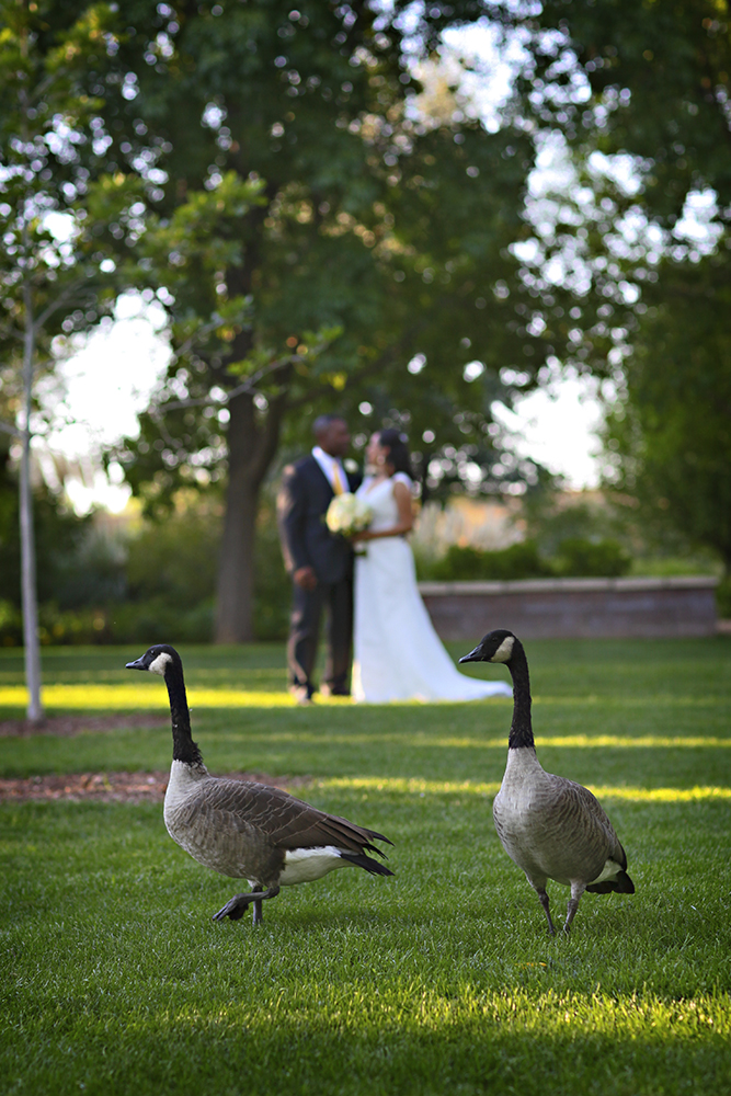 As An Albuquerque Wedding Photographer I Enjoy The Opportunity To  Photograph Weddings At Albuquerque Botanic Gardens Wedding Venue Several  Times A Year.